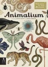 Rachel Animalium